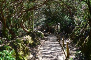 Escursioni a Tenerife