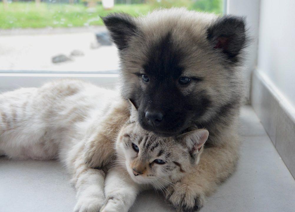 animali a tenerife