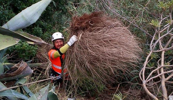 Svolgono lavori di controllo di flora esotica invasiva in 36 ...
