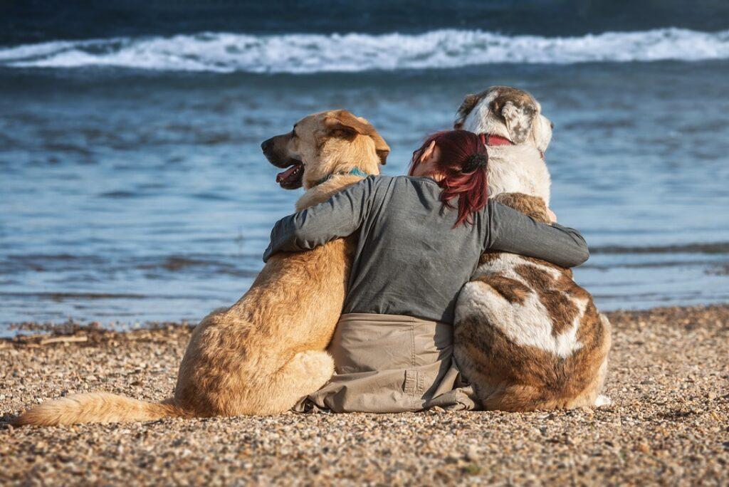 Spiagge per cani a Tenerife